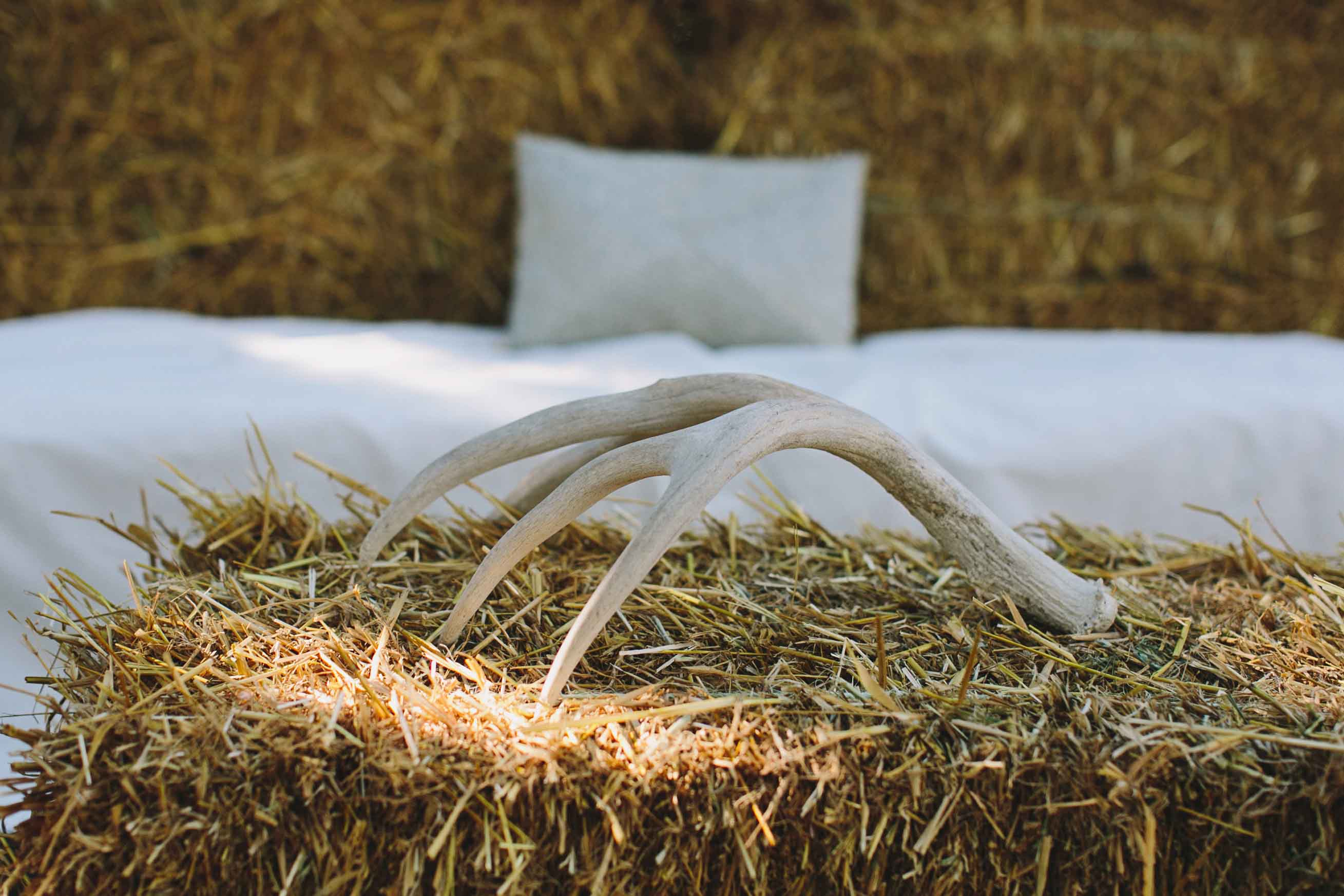 Antler Decor | Rustic Wedding Decor | Tableau Events